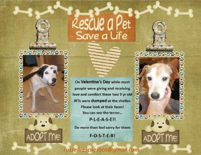 Two dogs need fostered or adopted ASAP