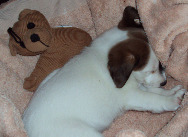 Just a lil napp when I was 2 months old....~!