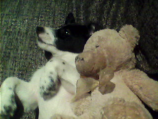 malkie and teddy