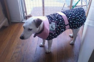 Mollie with her Rain coat on.