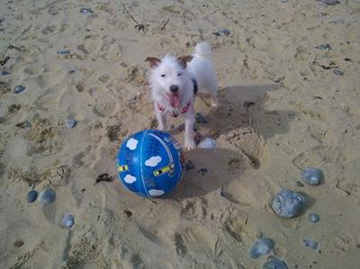 benny on the beach with his new ball