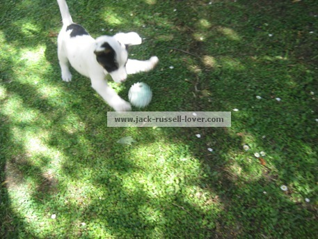 Puppy training games - fetch