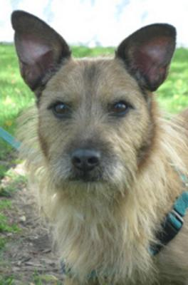 Scruffy Brave Heart from HAWS Shelter, WI