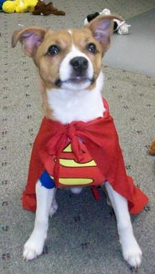 Super Willie JRT