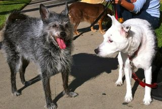 KISSES and RIO's owner died unexpectedly and they need a home