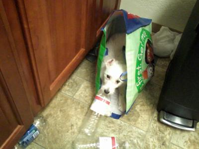 Playing in the recycling bag