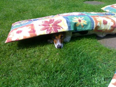 Ive had enough sun for now! Roxy actually flipped the cushion herself & crawled under. Clever girl.